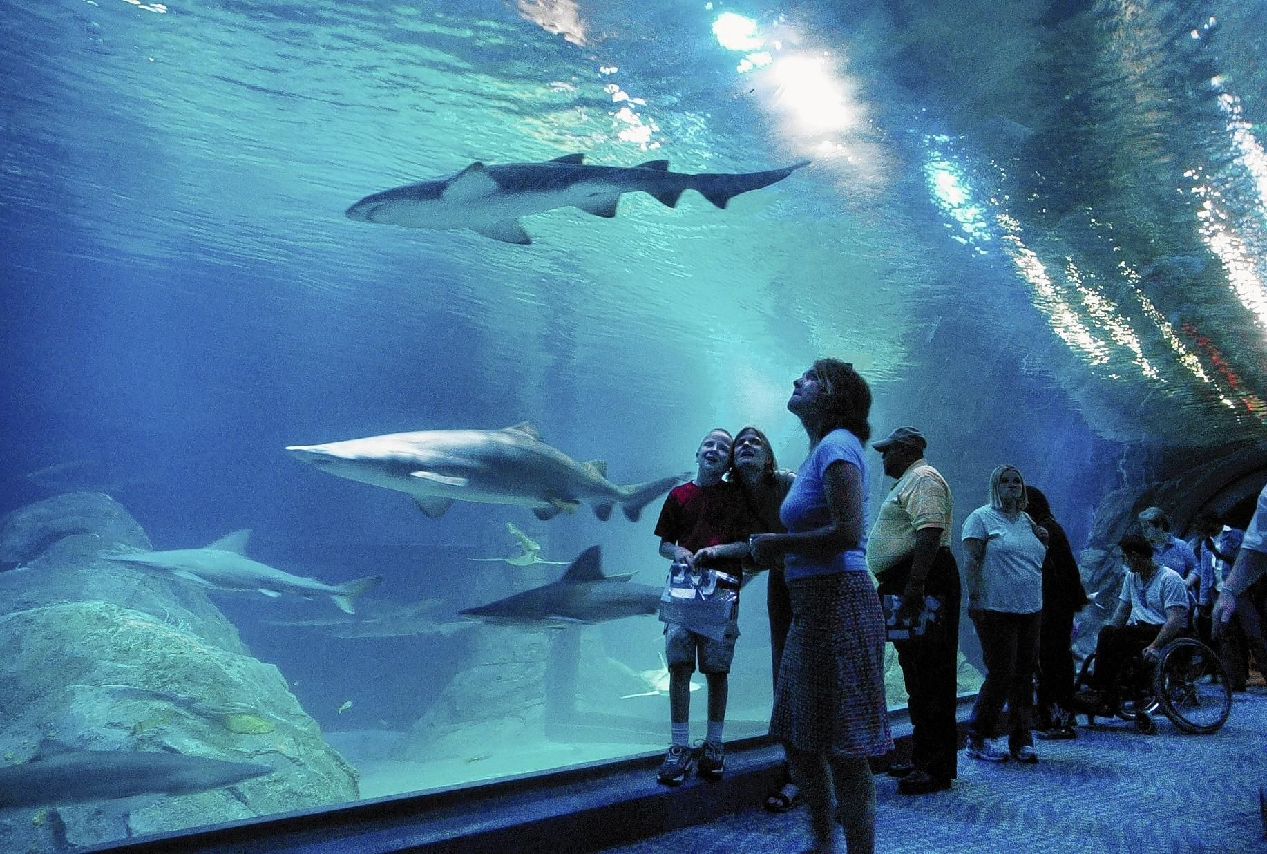 Adventure Aquarium | Adventure, Fun family activities ...
