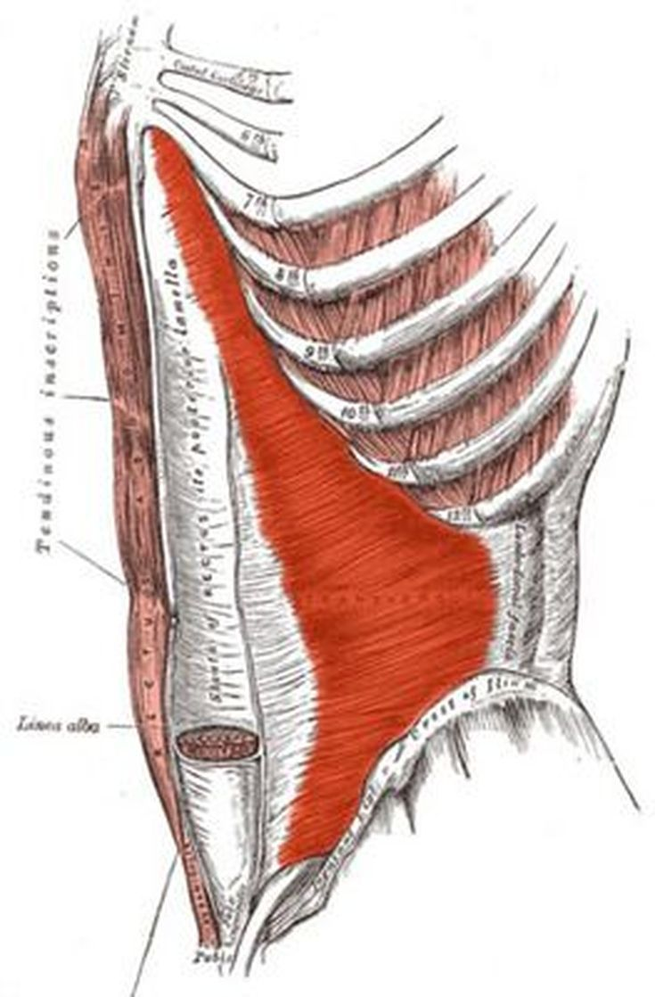 Meet Your Ab Muscles to Find Out How They Work | Muscle anatomy ...