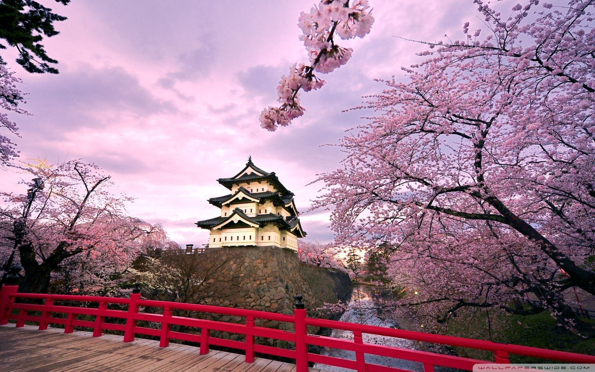 10 Best Cherry Blossom Japan Wallpaper Full Hd 1920 1080 For Pc