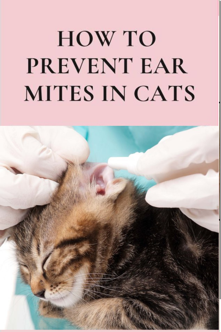 How To Prevent Ear Mites In Cats Funny Cat Gifts Cats Funny Cat Videos