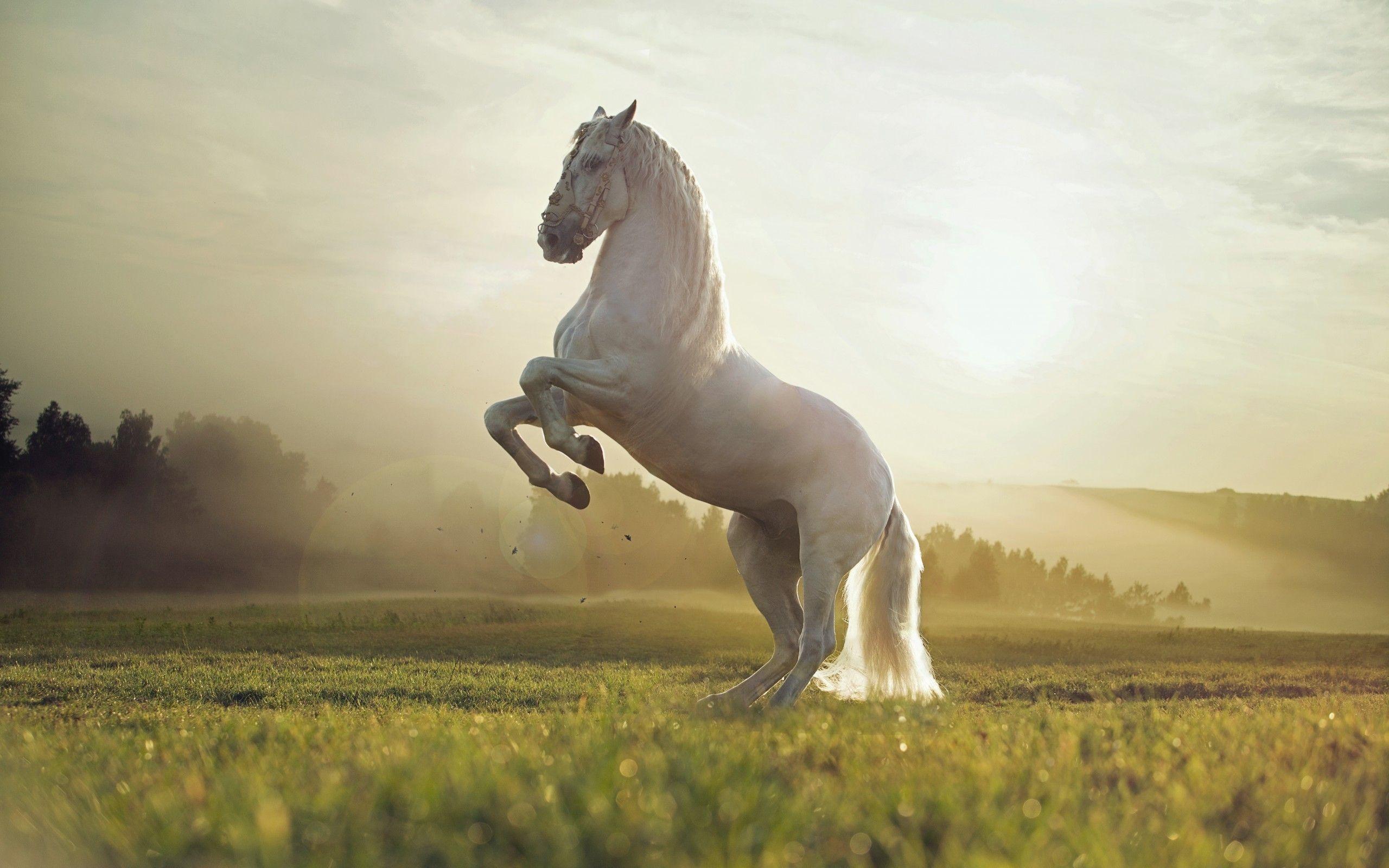 Horse wallpaper | Wallpaper HD Beautiful White Horse - HD Wallpaper Expert