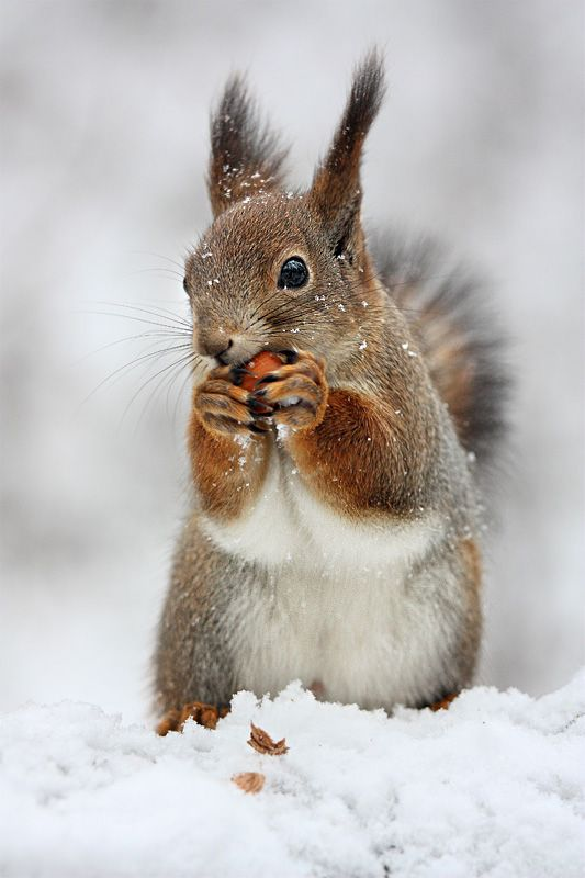 Photo of Squirrel…..so i took an interpreting the environment class in college and did …