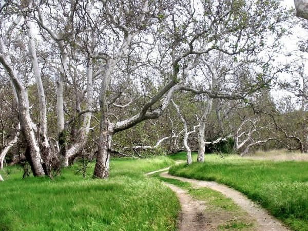 Sycamore Grove Park, Livermore, CA | Oh, the places I go (or would ...