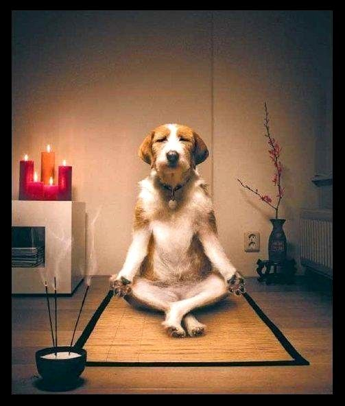 Image result for meditating dog meme