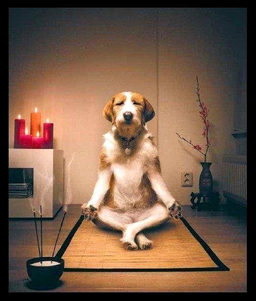 Image result for meditating dog meme