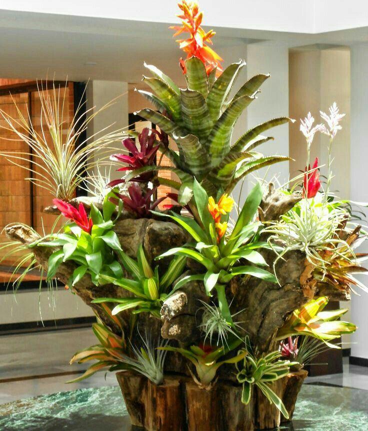 Tronco de bromelias y tillandsia plantas y flores for Jardineria y plantas