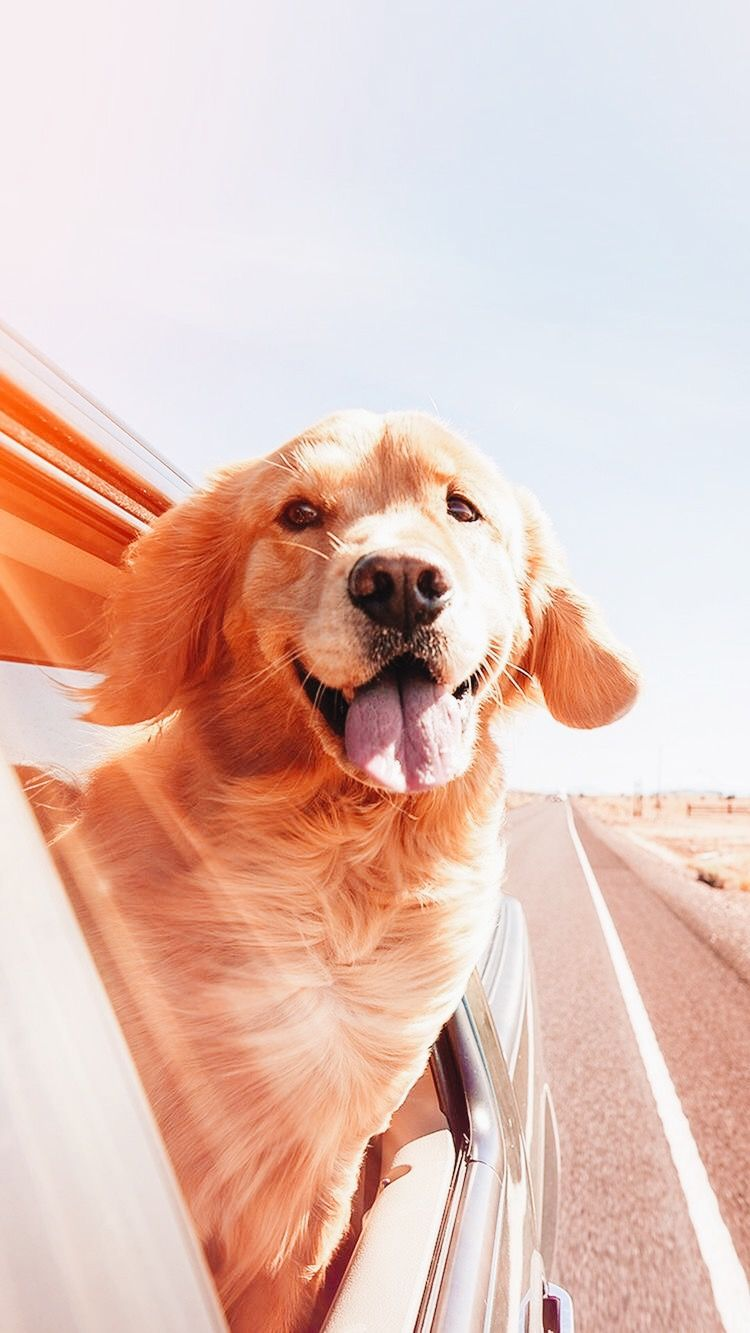 Puppy おしゃれまとめの人気アイデア Pinterest Mai 可愛すぎる