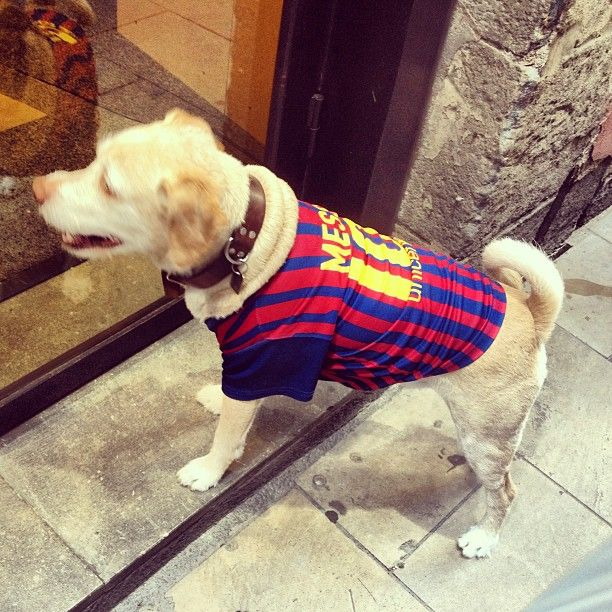 06ab9158e52  barcelona  barca  dog . Messi dreams to become this goodlooking with this  team shirt -  gabsfromthehead-  webstagram