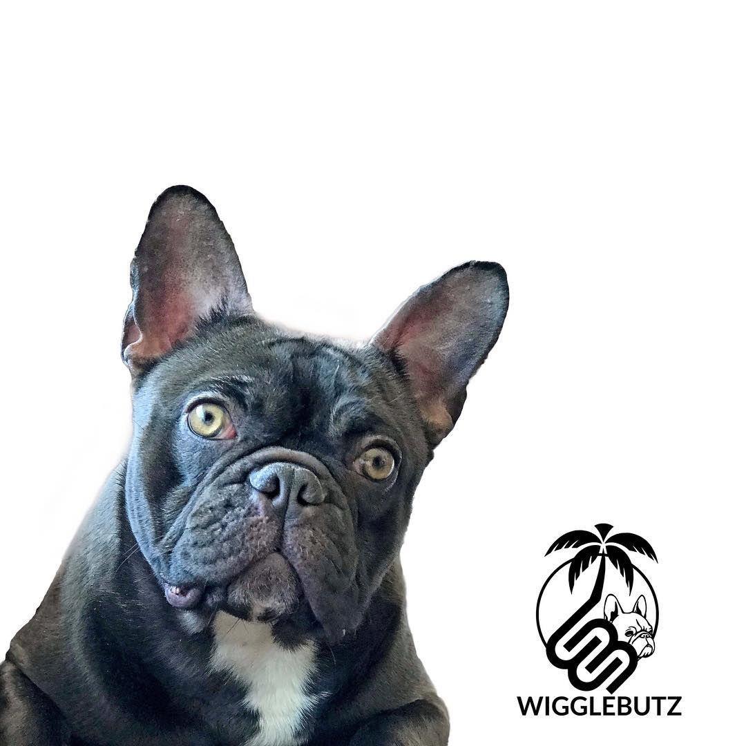 Pout Pout Ig Wiggle Butz Wigglebutz Wb Wbpout Hawaii