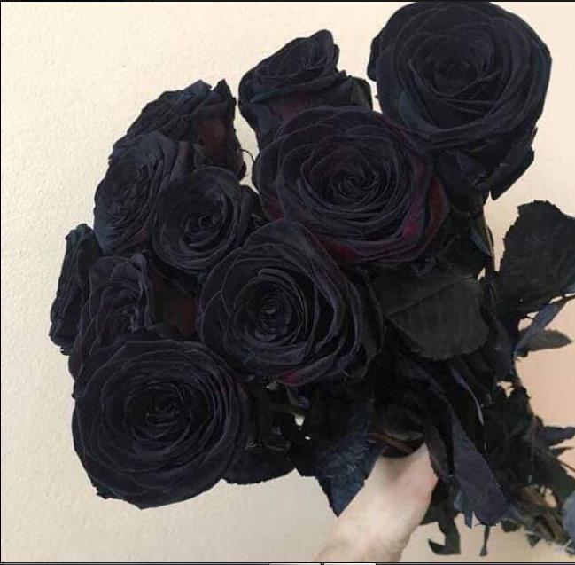 ورود سوداء Black Rose Bouquet Black Rose Flower Black Flowers
