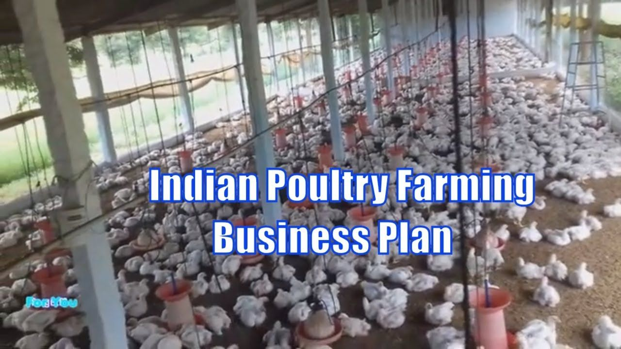 Indian Poultry Farming Business Plan/How to Start Broiler