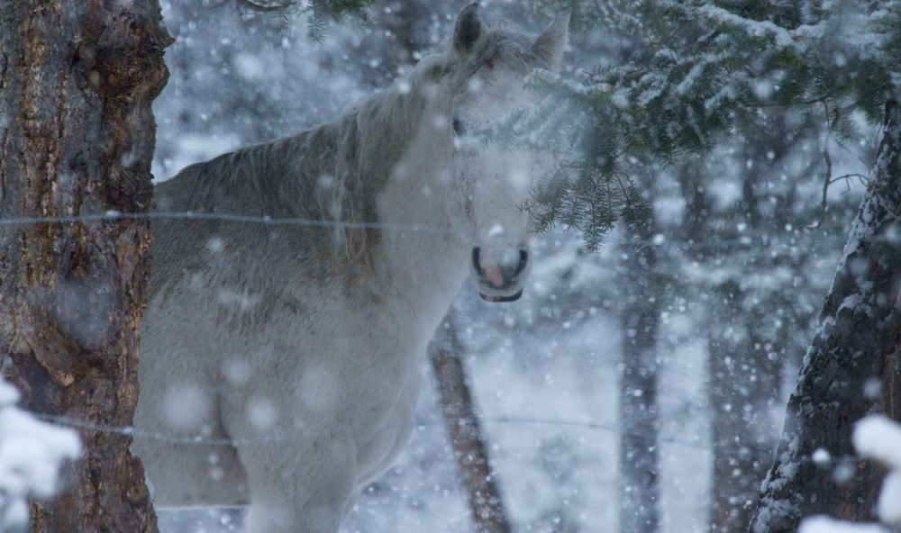 Peak A Boo  #horses Love The Snow Days. --Your Shot. NATIONAL GEOGRAPHIC.