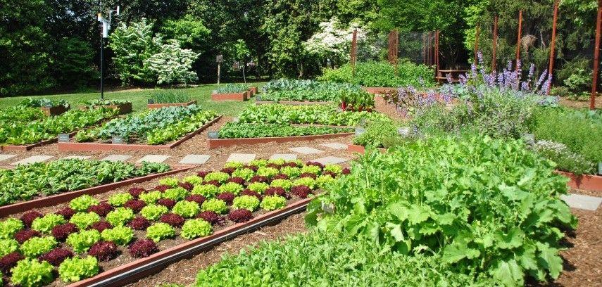 kitchen garden terrace vegetable garden ideas india  best