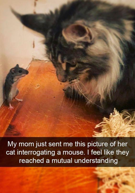 22 Hilarious Animal Photos - #hilariousanimals