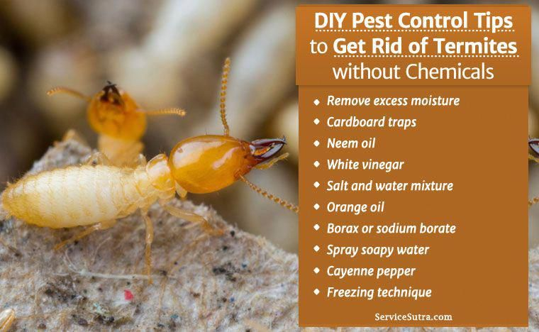How To Get Rid Of Termites In A Live Tree
