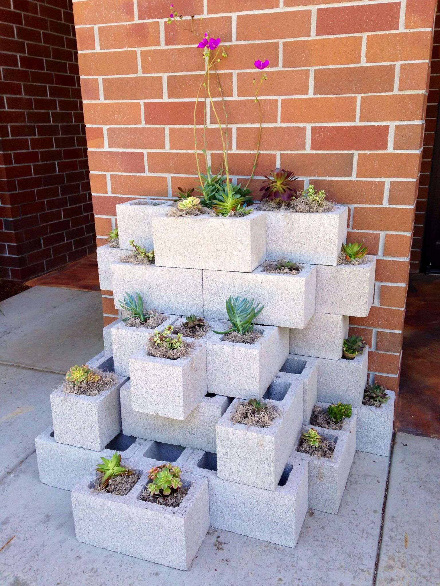 Plant succulents in cement blocks for a versatile urban for Jardineras con bloques