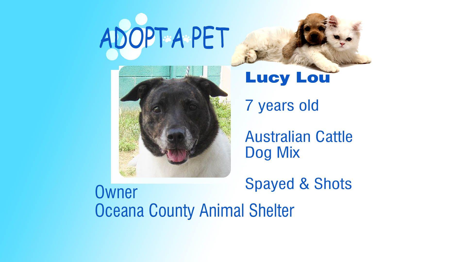 Adopt A Pet Tuesday: Plum, Toodeloo, and Lacy Lou