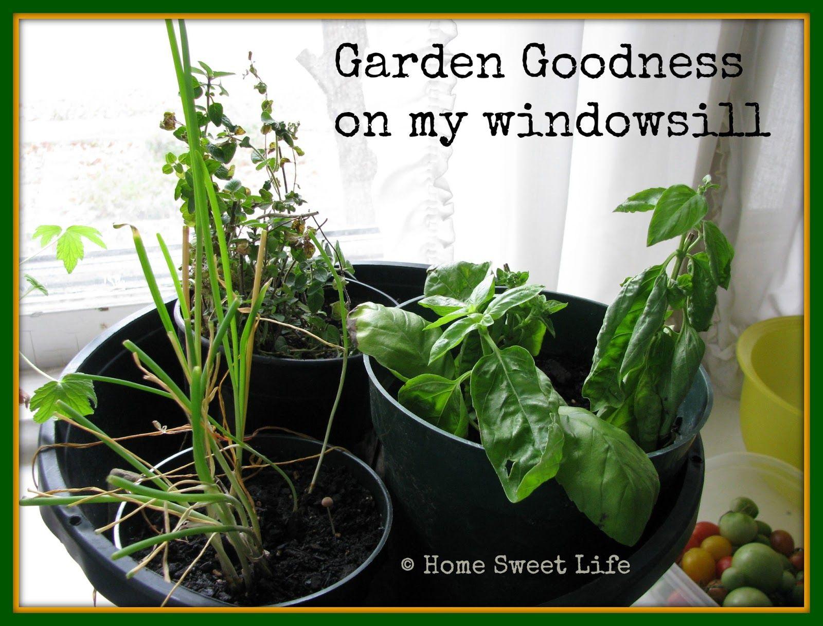 winter gardens indoor gardening healthy living ideas