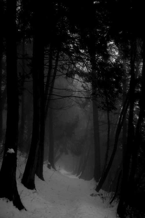 Beautiful Dark Things Ideias De Paisagismo Natureza Bela Floresta Escura
