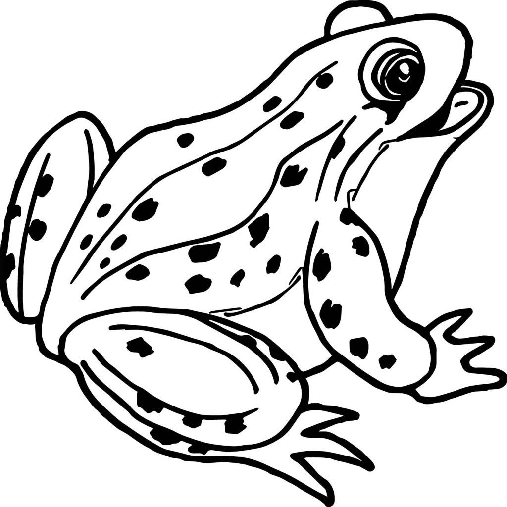 Frog Coloring Pages Frog Coloring Pages Mermaid Coloring Pages