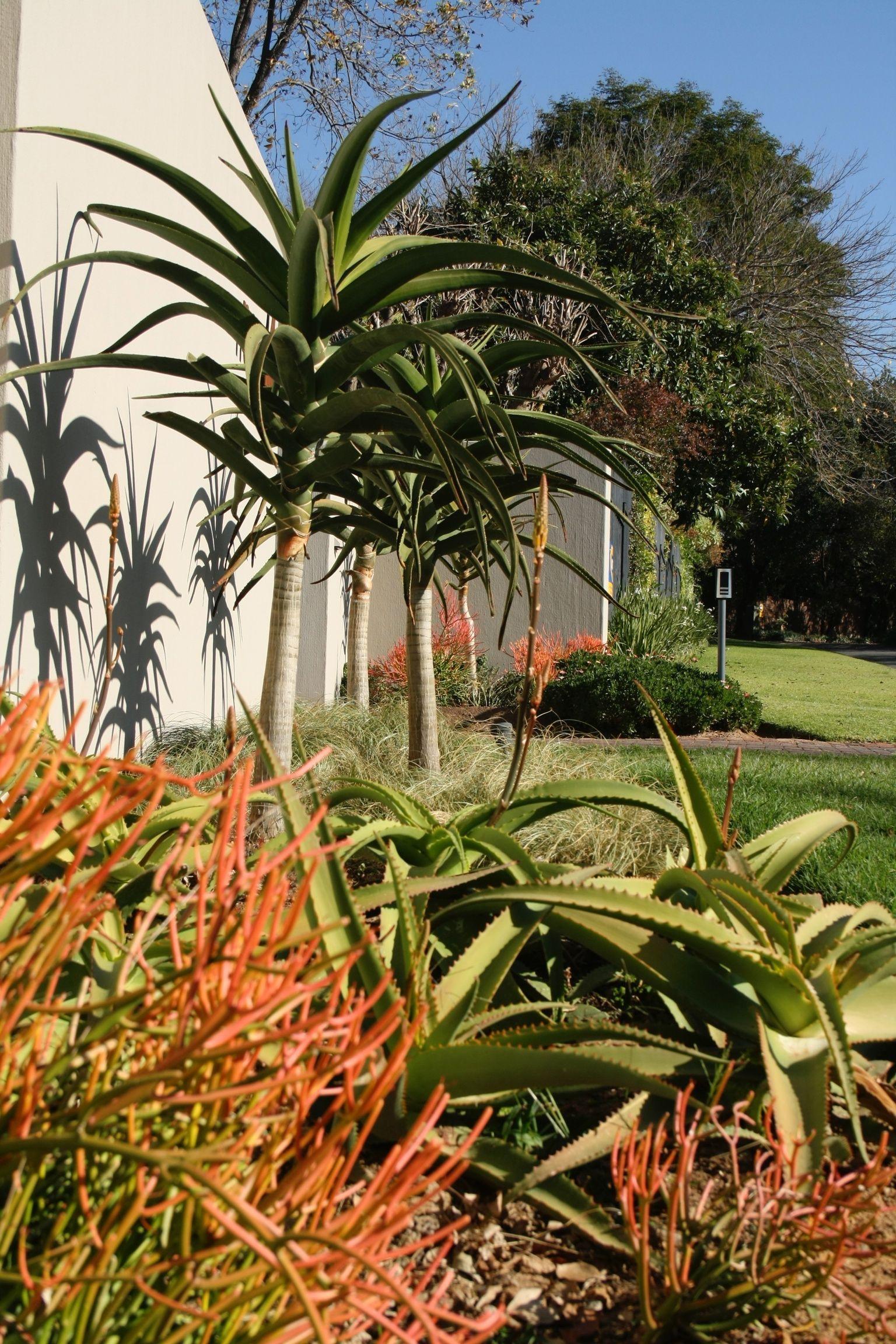 Water Wise Indigenous South African Garden Garden Ideas South