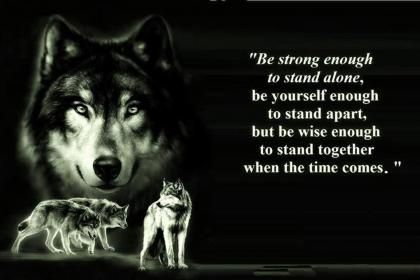 Wolf Wisdom Hd Wallpaper Wolf Quotes Lone Wolf Quotes Quotes