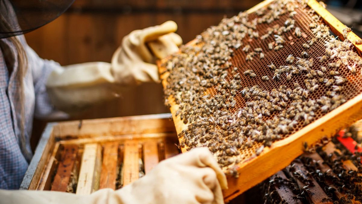 the big buzz in hollywood is legalized backyard bees