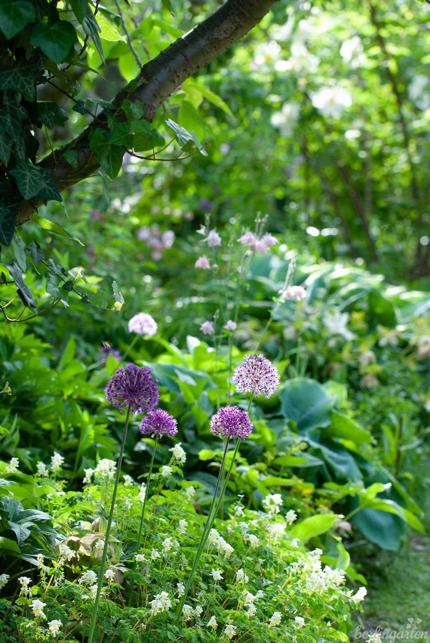 Mit Blattstrukturen Gestalten Lieblingsfarbe Grun Berlingarten In 2020 Pflanzen Garten Schattengarten