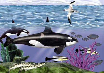 Pin By Jose Top On Thomas Wood Artist Whale Orca Kitchen And Bath