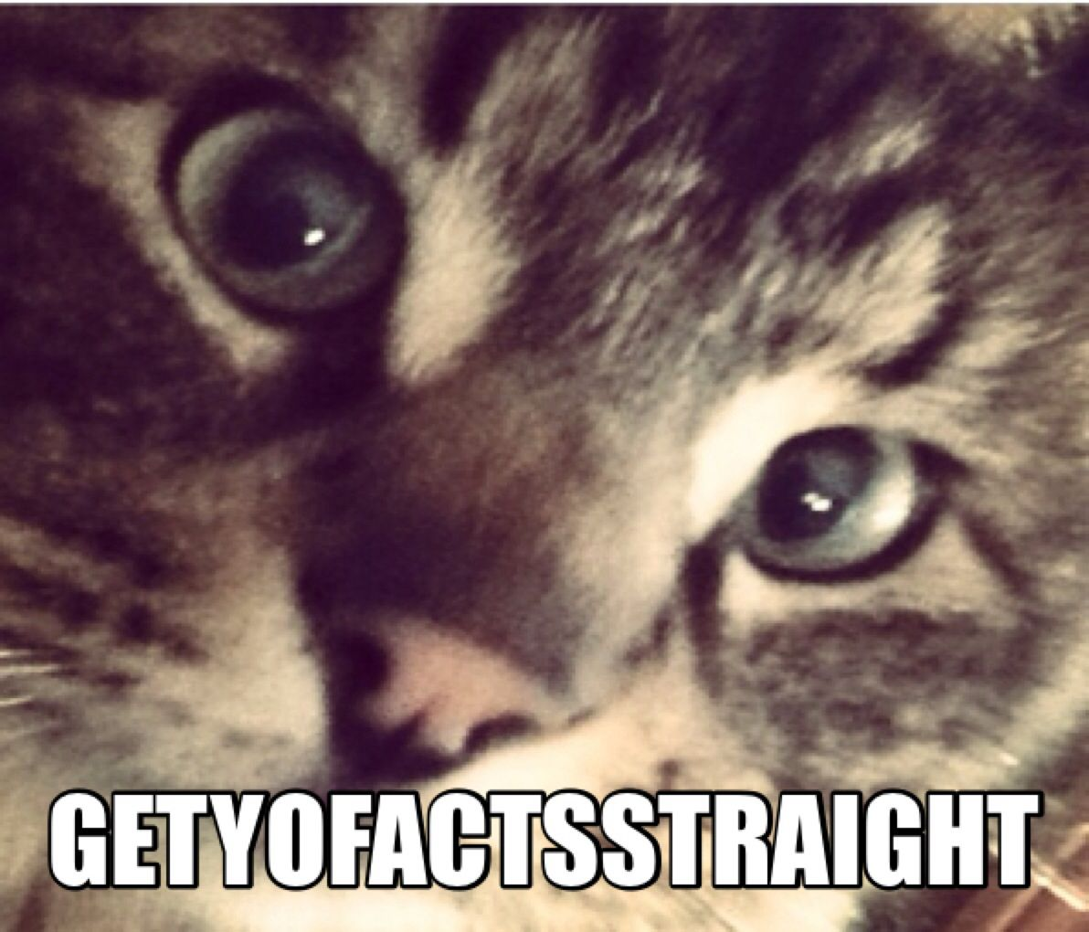 Derp Cat Cat memes, Cats