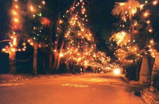 Christmas Tree Lane Altadena California Santa Rosa Avenue Between