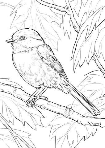 Black-capped Chickadee kleurplaat Mehr | Projecten om te proberen ...