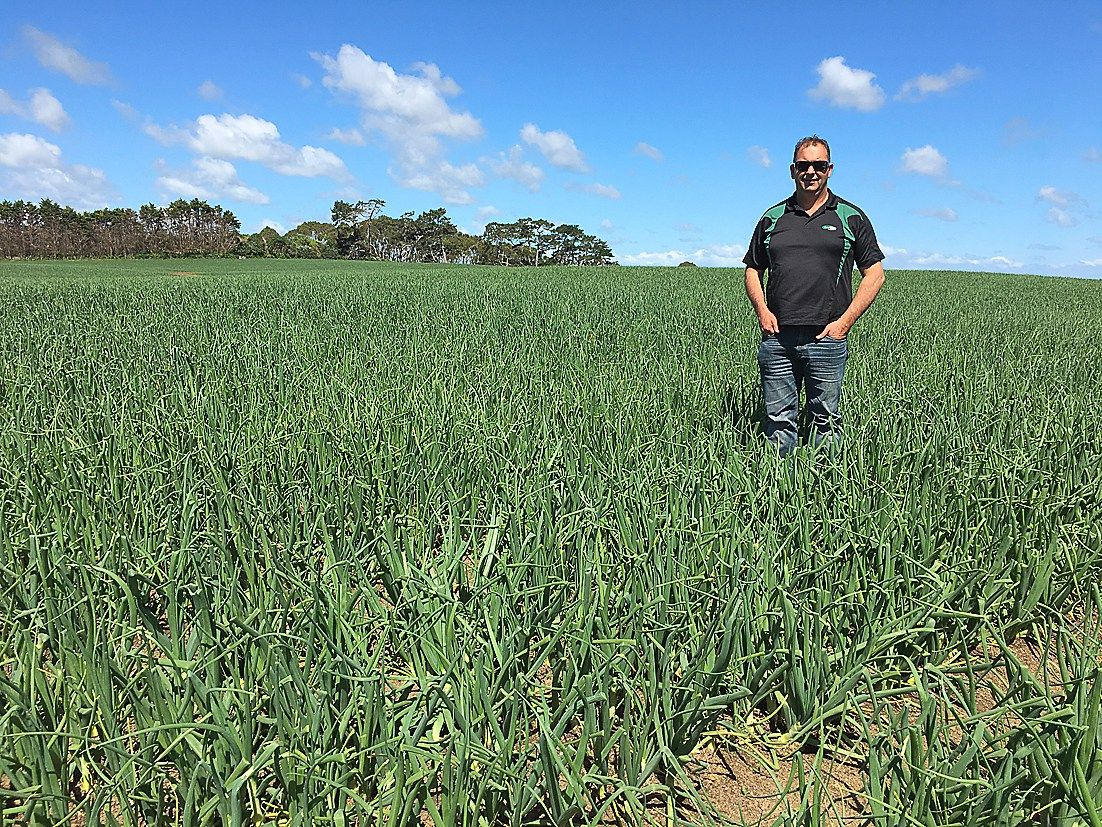 Family businesses holding onto horticultural land in