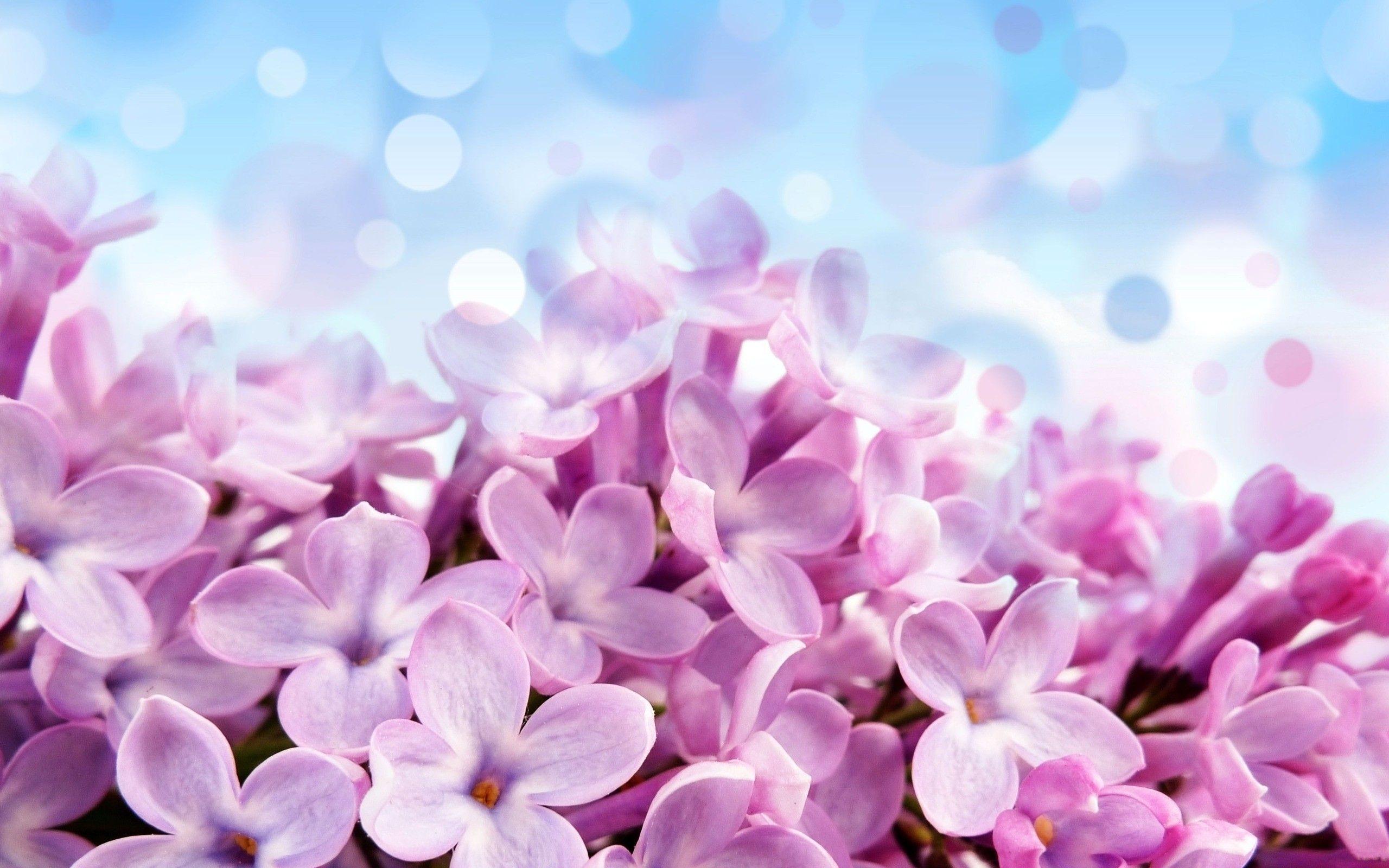 Lilacs Free Flower Wallpaper Flower Wallpaper Flowers