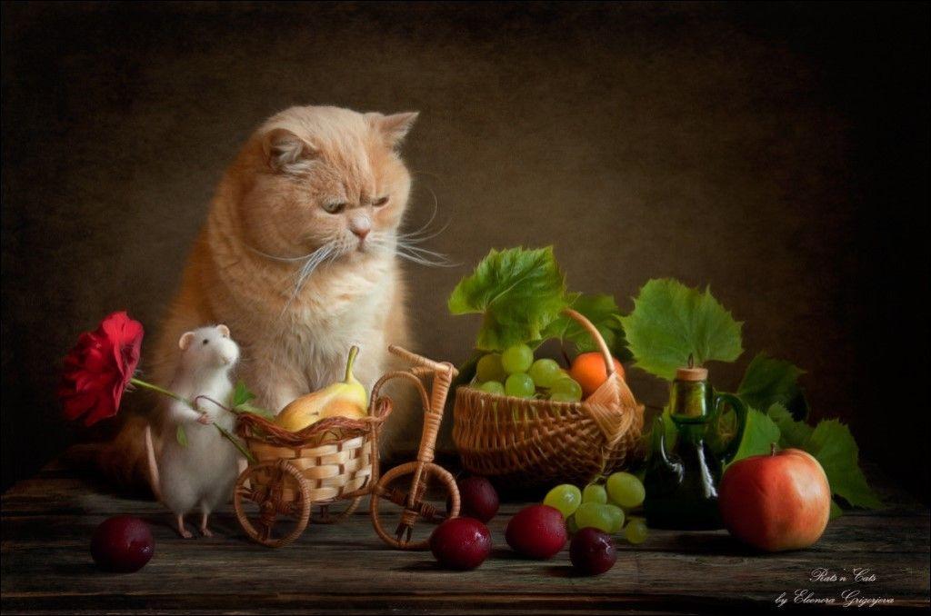 фото картинки фотонатюрморты с кошками картинки, глаза