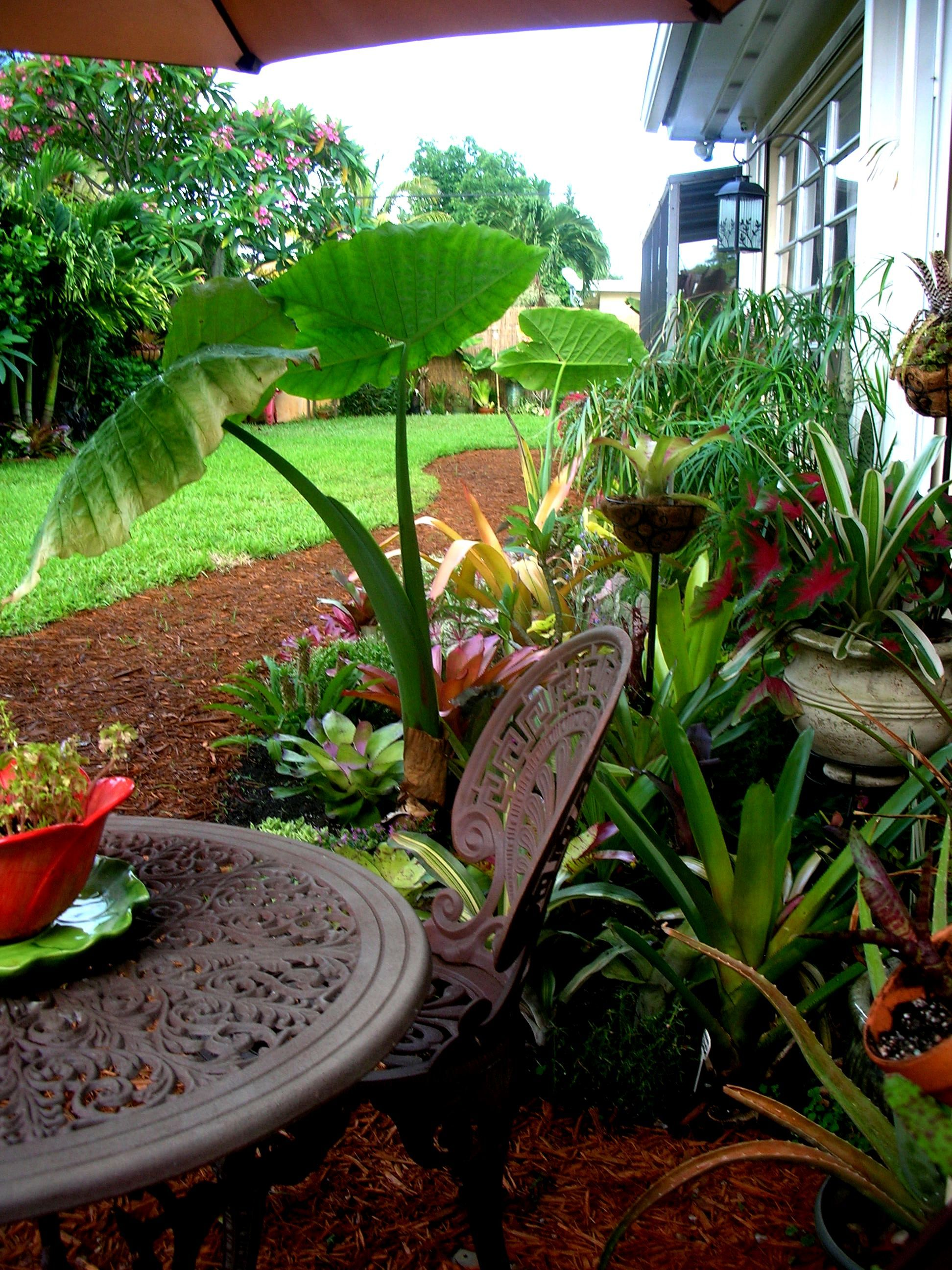 mini tropical oasis morning coffee spot ensconced in bromeliads