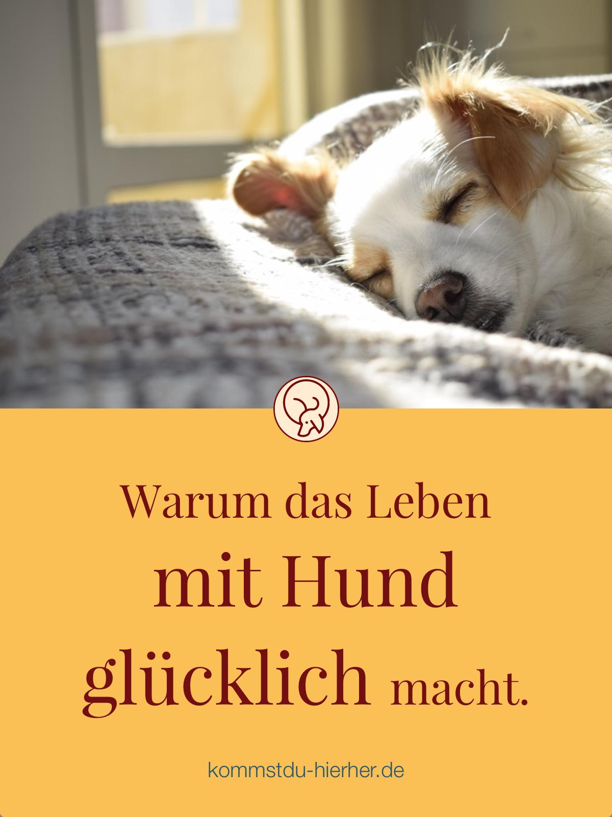 Endlichkeit Ein Glucksrezept Mit Bildern Hunde Malteser