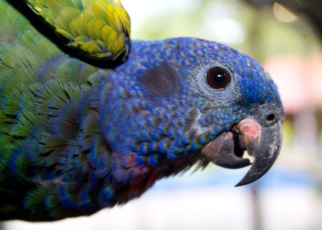 5 Best Pet Birds For Kids Pet Birds Best Pet Birds Pet Birds