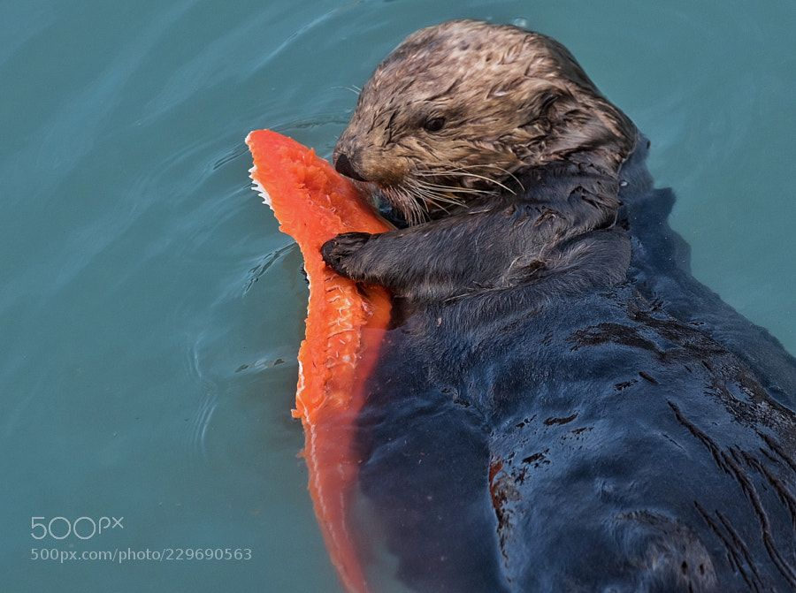 OurTravelPics.com :: Travel photos :: Series lisbon ... |Sea Otters Eating Bears