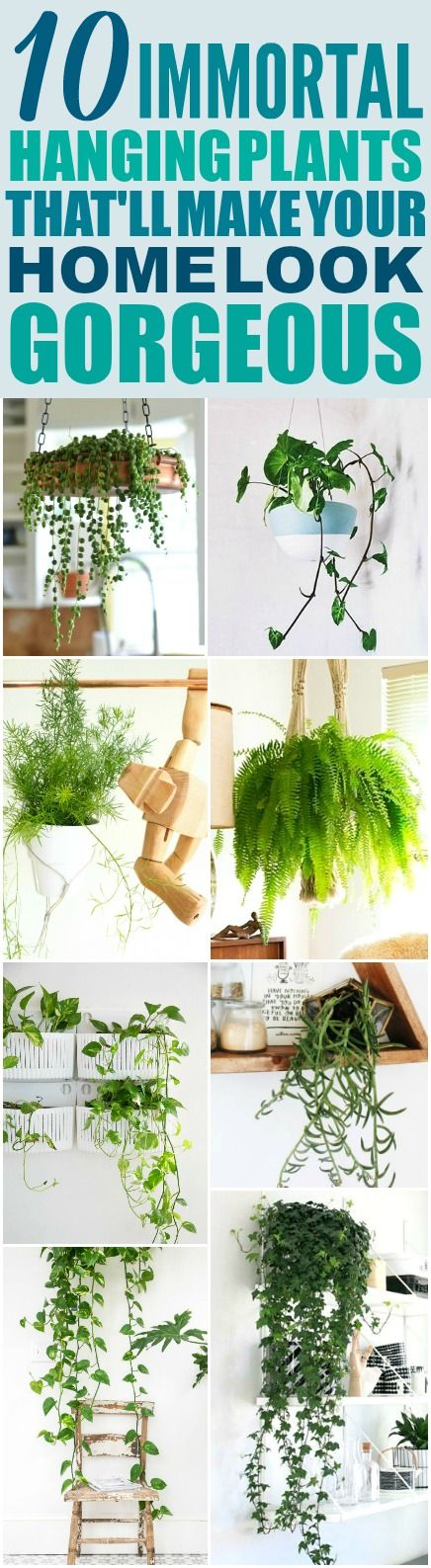 These 10 Low Maintenance Hanging Plants Are The Best I M So Hy Found Amazing Ideas Now Have A Great Way To Decorate My Home And Not Kill