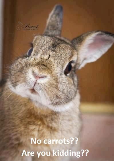 No Carrots Are You Kidding 02 20 14 Cute Animals Funny Bunnies Bunny Pictures