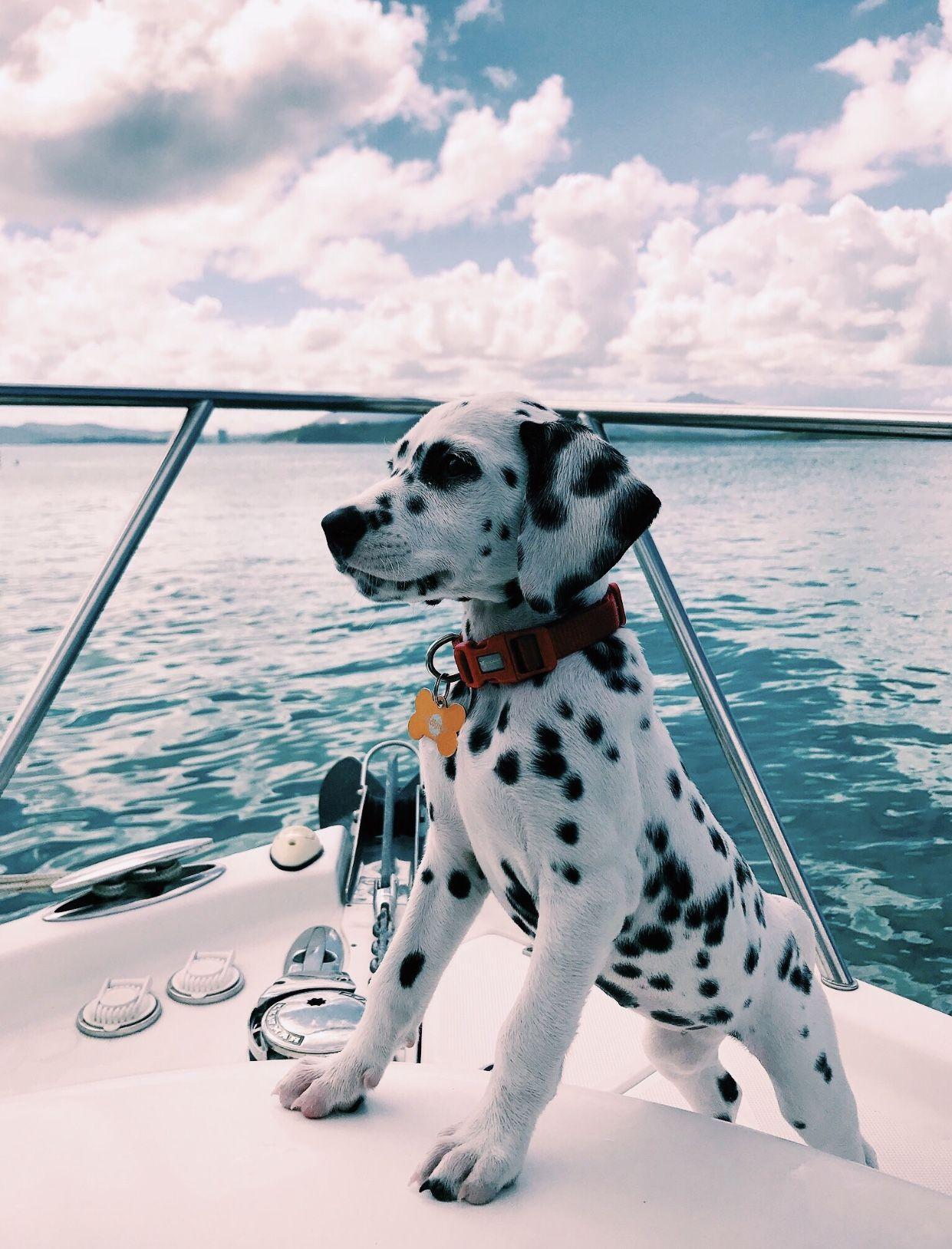 Pin Von Anna Auf Summer Tiere Hund Tiere Flauschige Tiere