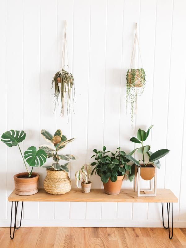 hanging house plants 2331000109 outdoorhangingplants