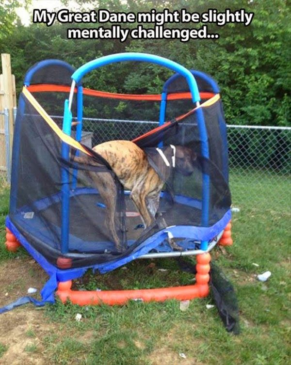 Fun Claw - Funny Cats, Funny Dogs, Funny Animals: Funny Dogs - 21 Pics