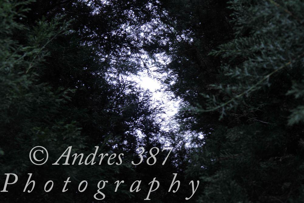 natural pinos