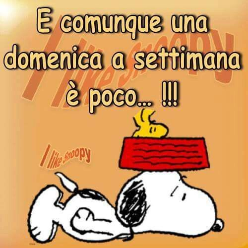 Domenica Pensieri Snoopy Humor E Funny Images