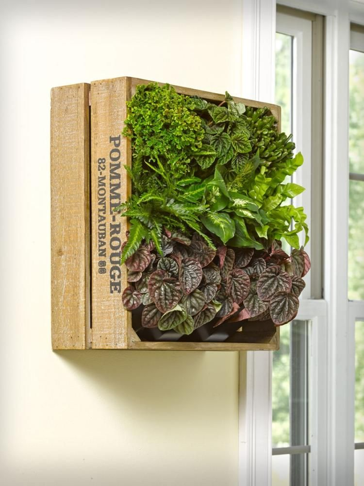 weinkiste mit pflanzen vertikal an der wand montieren. Black Bedroom Furniture Sets. Home Design Ideas