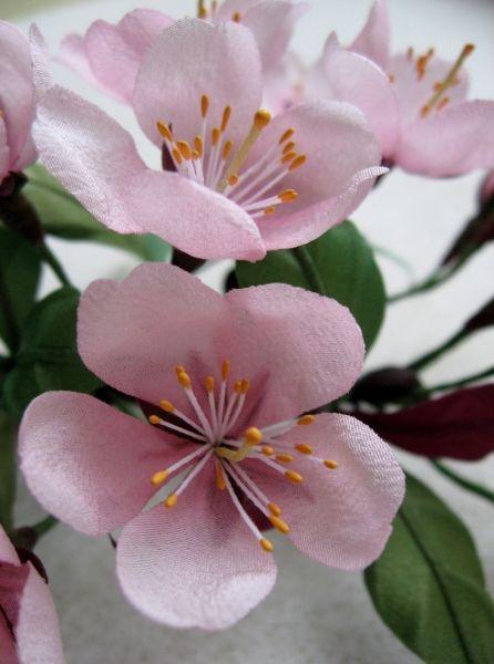 Cherry Blossom Closeup Blossom Flower Blossom Japanese Cherry Blossom