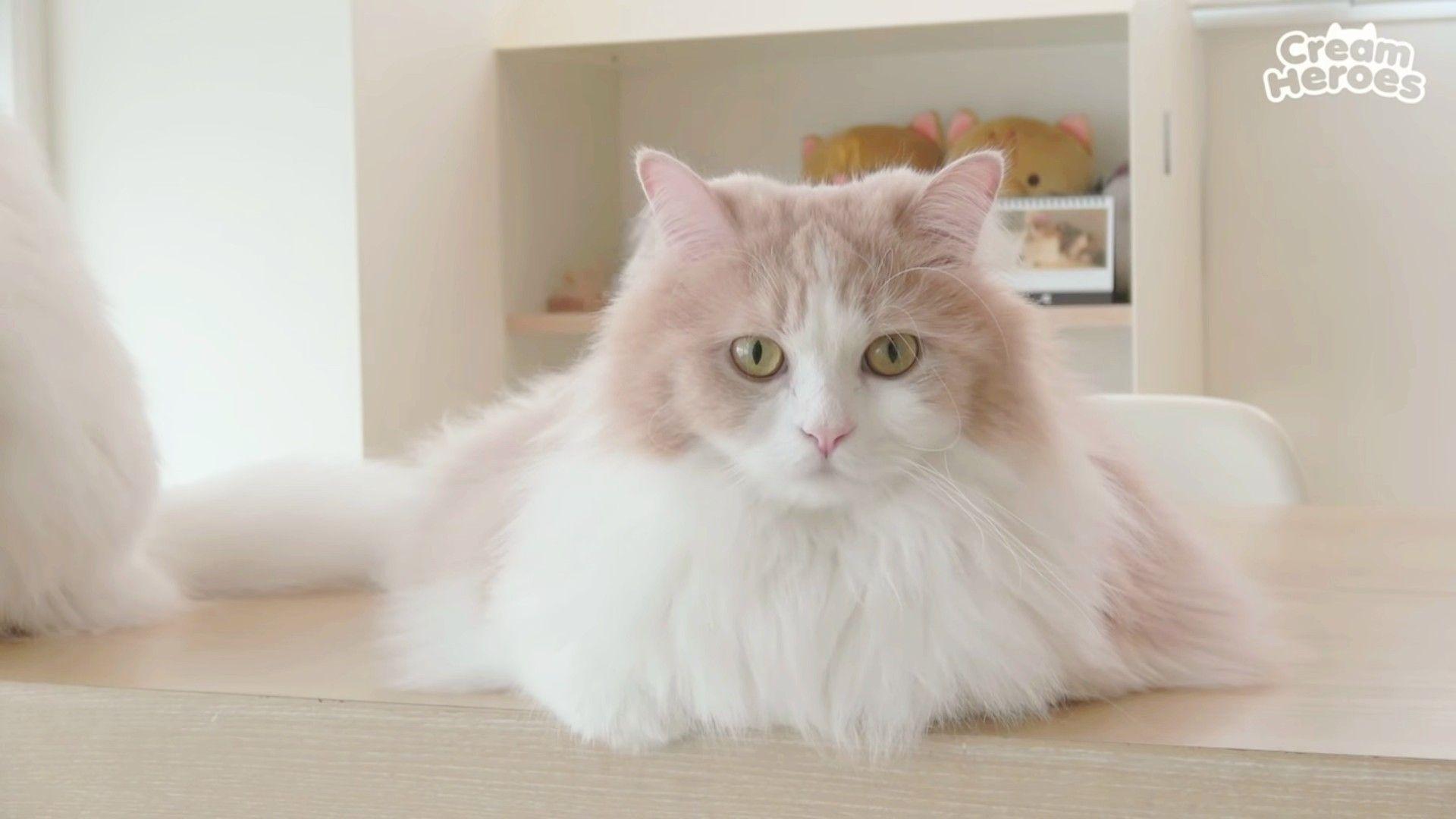 Dd Dun Dun Kucing