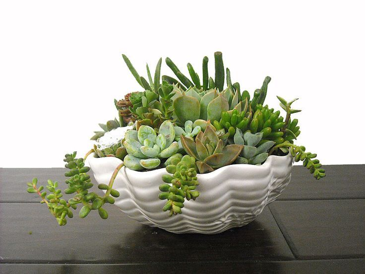 Pin by Julie A E. on Miniature gardens Succulents